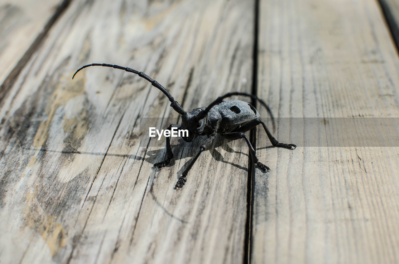 invertebrate, insect, animal themes, animal, one animal, animals in the wild, animal wildlife, wood - material, close-up, no people, selective focus, table, arthropod, arachnid, high angle view, zoology, day, outdoors, textured, spider