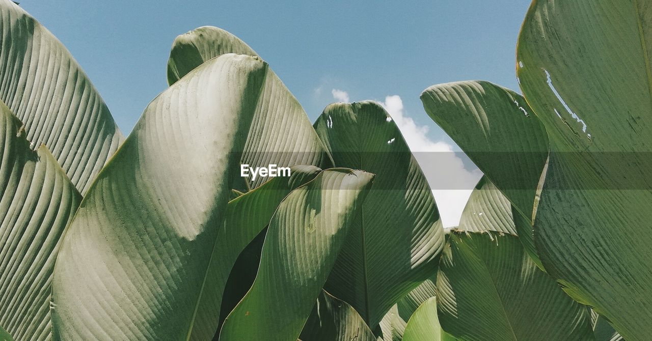 growth, nature, day, plant, no people, leaf, green color, outdoors, low angle view, beauty in nature, close-up, freshness, sky