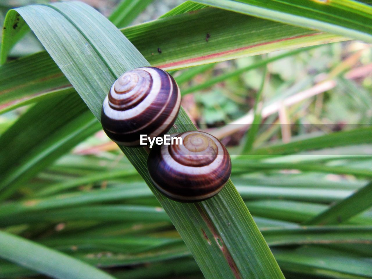 High angle view of snail on grass