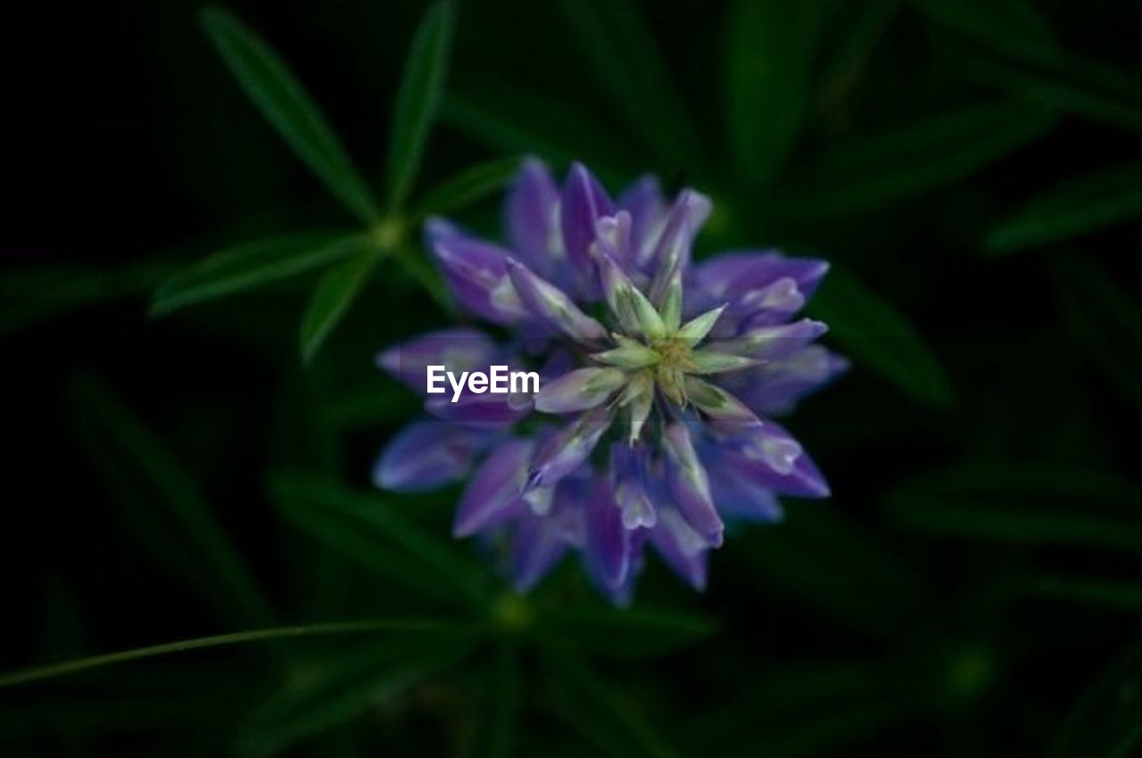 flower, nature, growth, purple, fragility, no people, leaf, plant, beauty in nature, freshness, close-up, outdoors, flower head, day