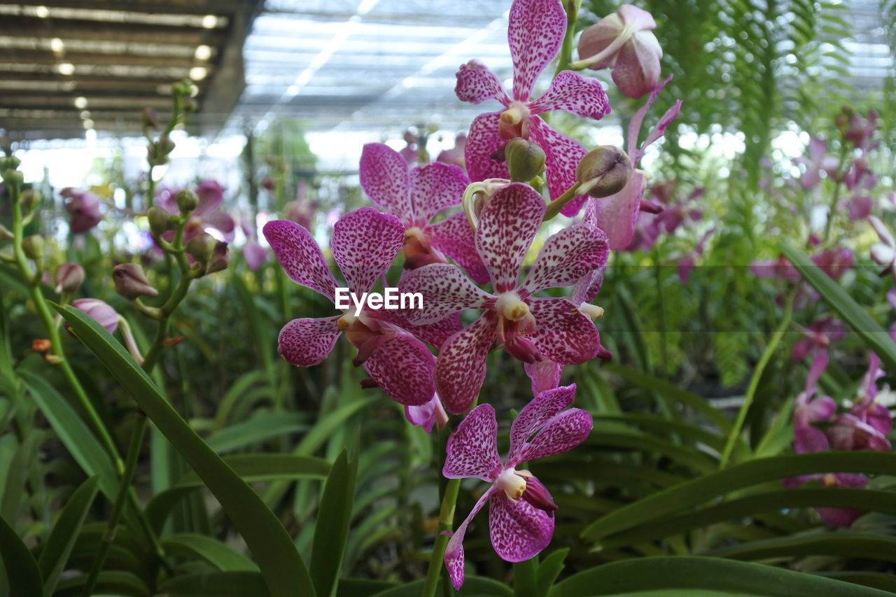 plant, growth, flowering plant, flower, close-up, beauty in nature, vulnerability, focus on foreground, fragility, freshness, nature, day, no people, flower head, petal, inflorescence, leaf, plant part, orchid, outdoors, purple, lilac