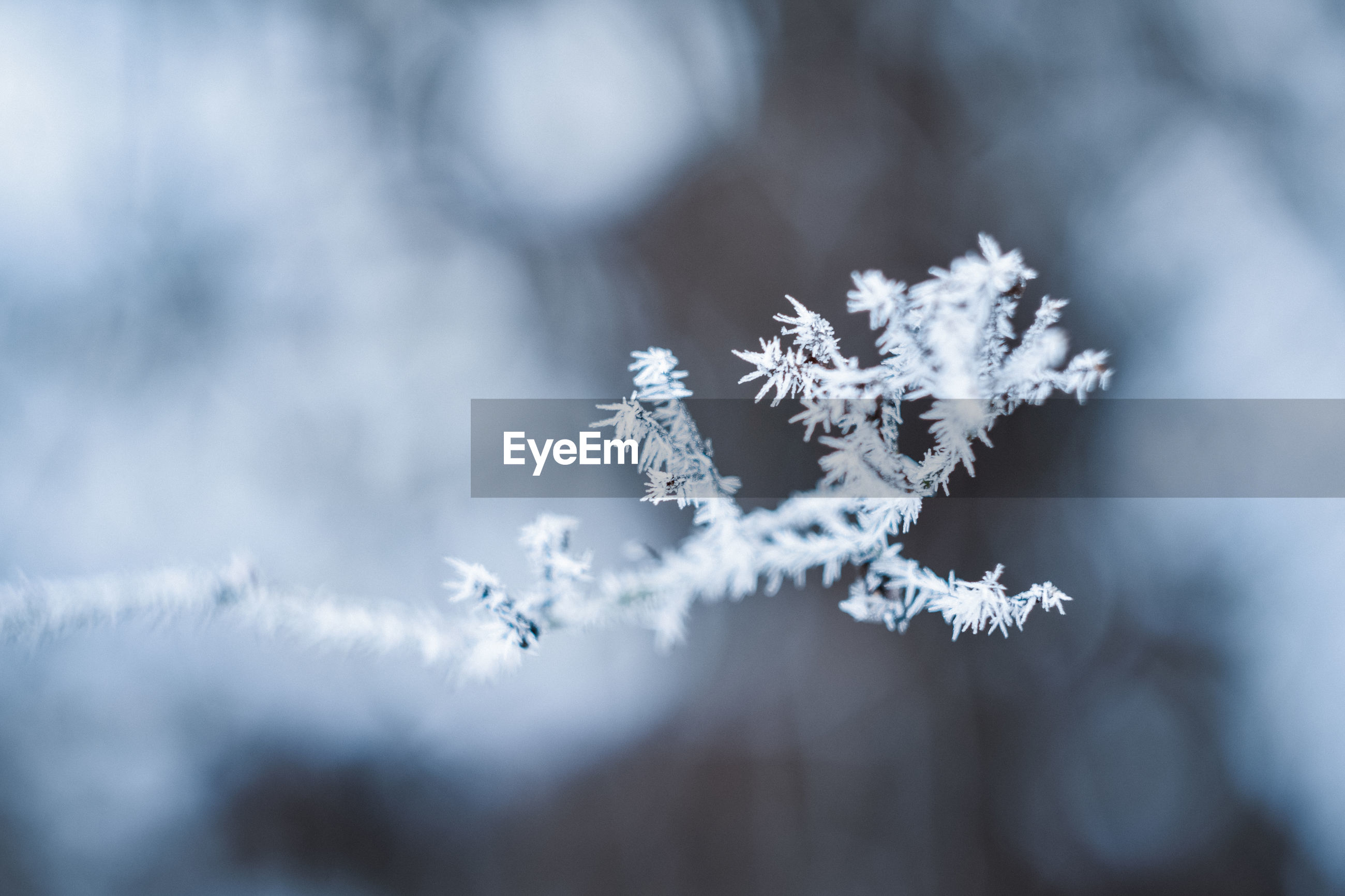cold temperature, winter, snow, frozen, beauty in nature, nature, no people, plant, close-up, day, ice, white color, selective focus, focus on foreground, fragility, vulnerability, outdoors, snowflake, tree, extreme weather, blizzard