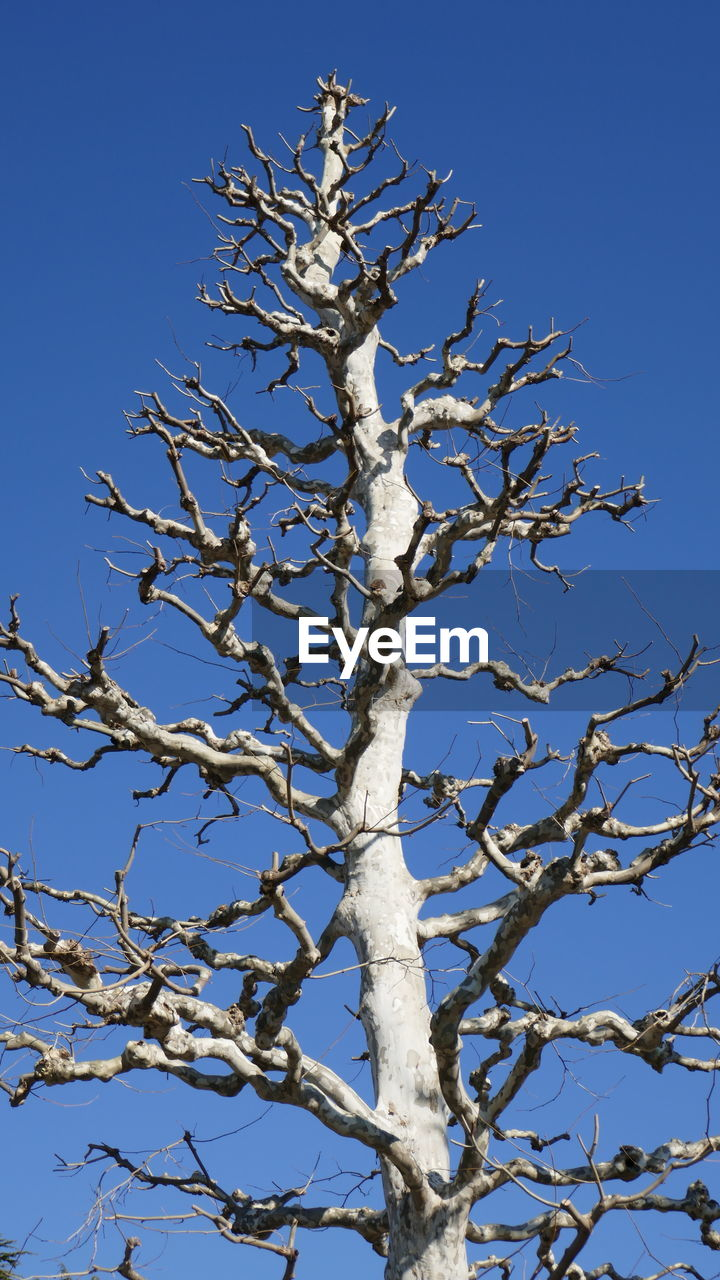 tree, sky, low angle view, branch, clear sky, plant, bare tree, no people, nature, day, blue, tranquility, sunlight, beauty in nature, outdoors, scenics - nature, growth, dead plant, tree trunk, cold temperature