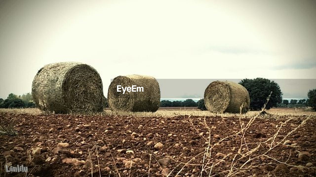 bale, hay, harvesting, agriculture, hay bale, field, rural scene, haystack, tranquility, tranquil scene, sky, no people, outdoors, day, nature, tree, beauty in nature