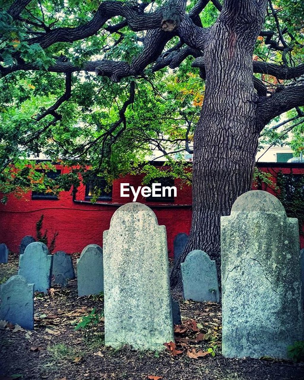 tombstone, cemetery, tree, day, memorial, spirituality, outdoors, no people, religion, tree trunk, red, gravestone, nature