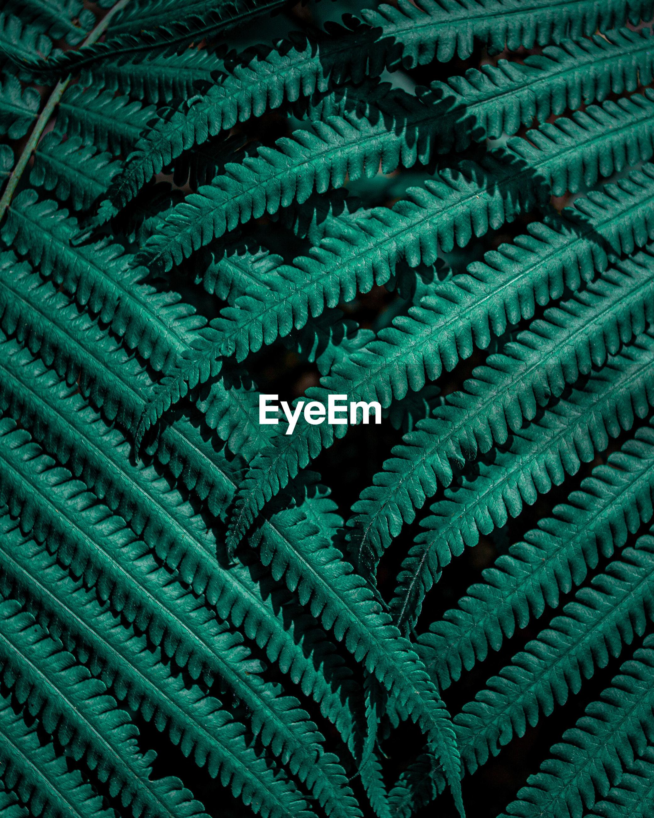 Closeup nature view of tropical fern leaf background, dark green wallpaper concept.