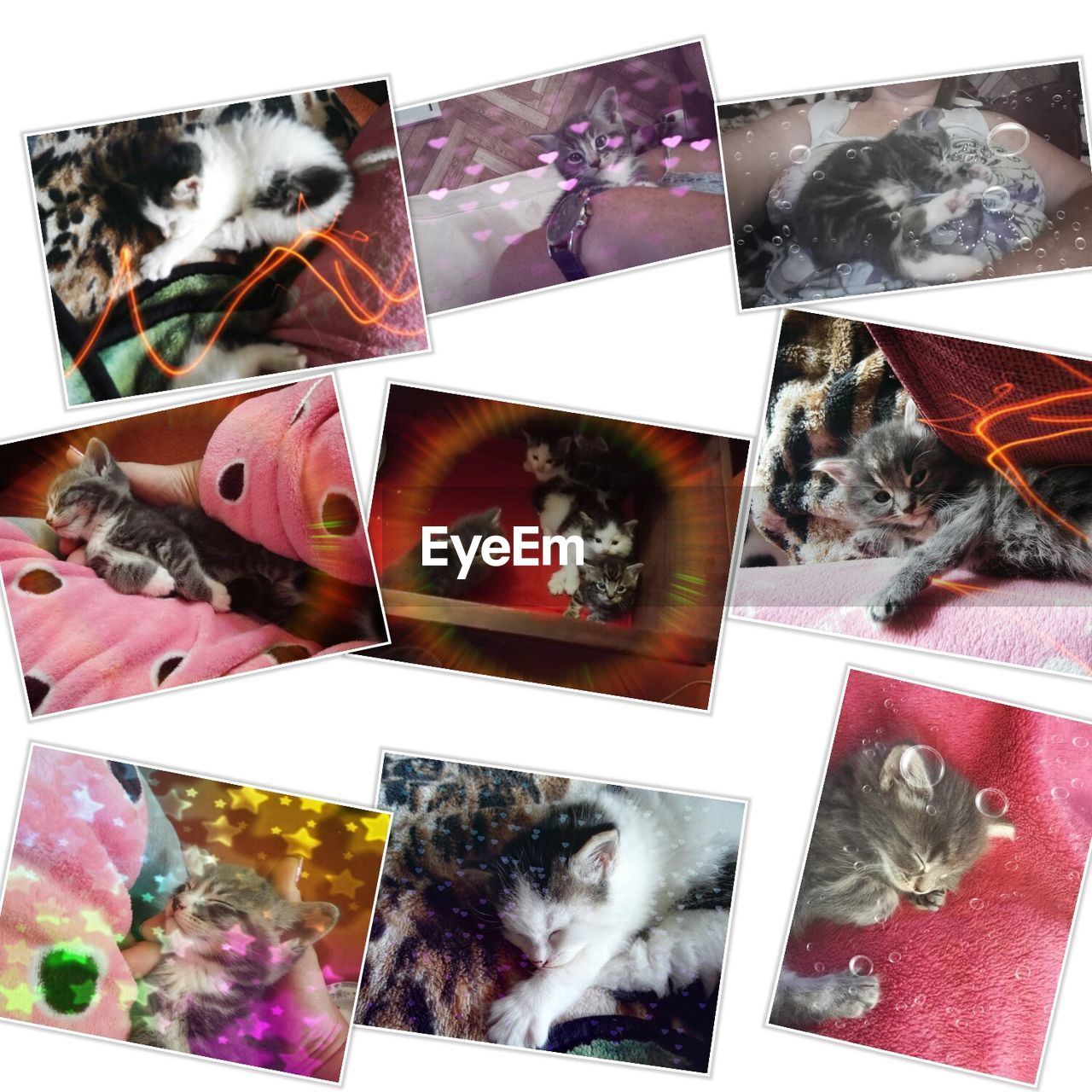 collage, digital composite, animal themes, variation, no people, domestic animals, pets, multiple image, white background, multi colored, mammal, photograph, close-up, indoors