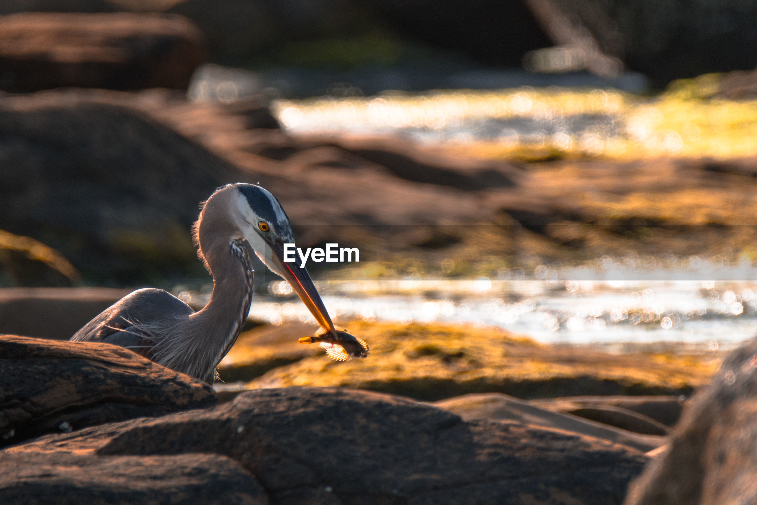 VIEW OF A BIRD ON ROCK