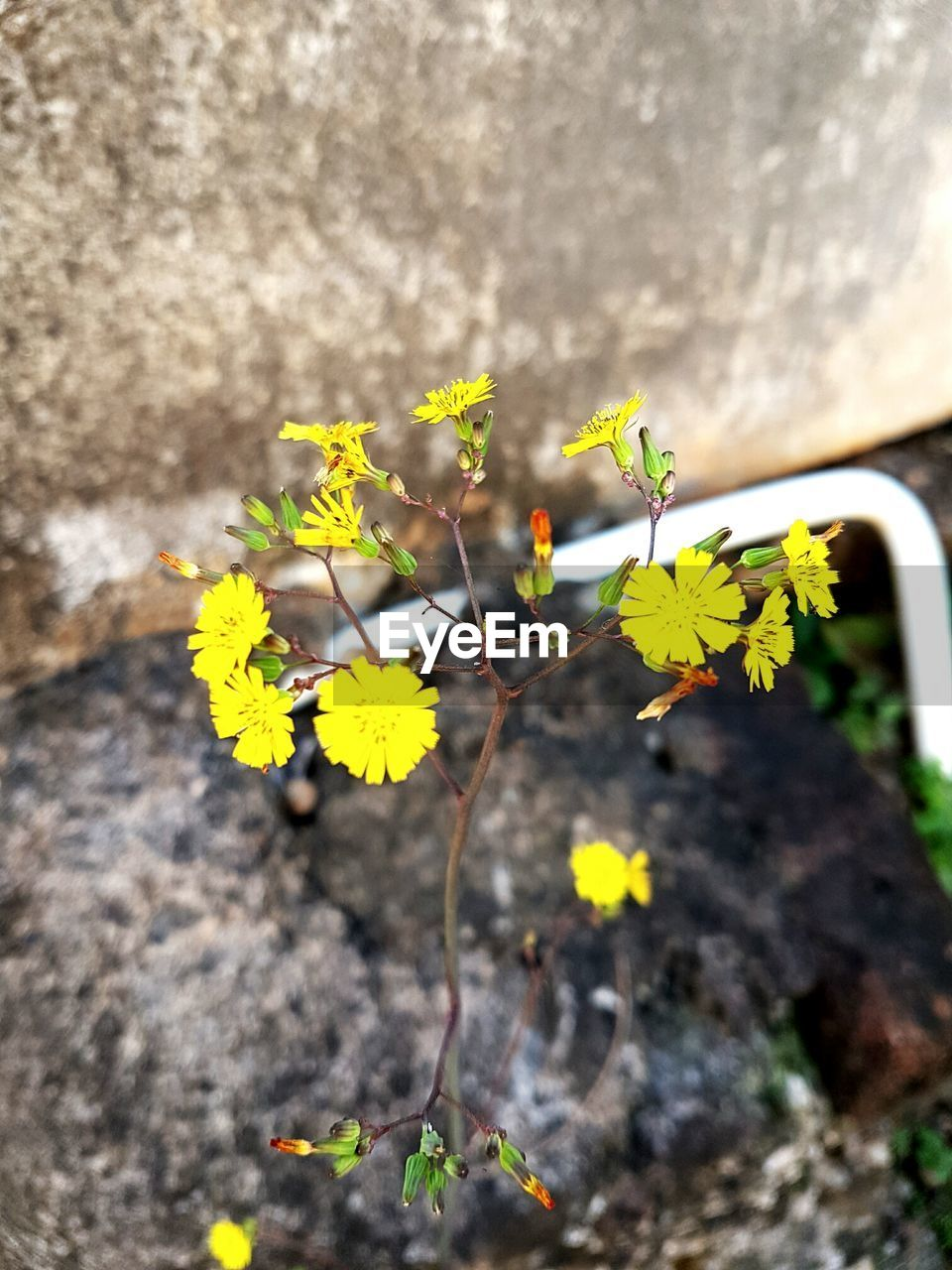 flower, growth, fragility, plant, nature, yellow, blossom, freshness, no people, outdoors, day, delicate, close-up, beauty in nature, flower head, blooming