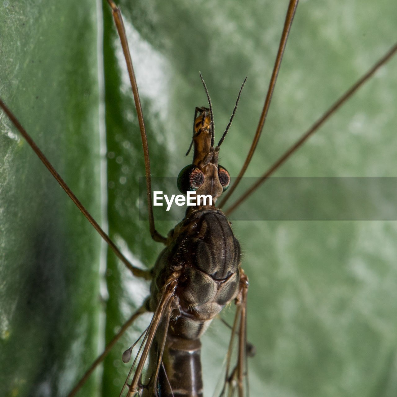 one animal, animal wildlife, animal, animals in the wild, animal themes, insect, invertebrate, close-up, day, nature, no people, focus on foreground, animal body part, zoology, outdoors, plant, green color, animal antenna, animal wing, animal head, animal eye