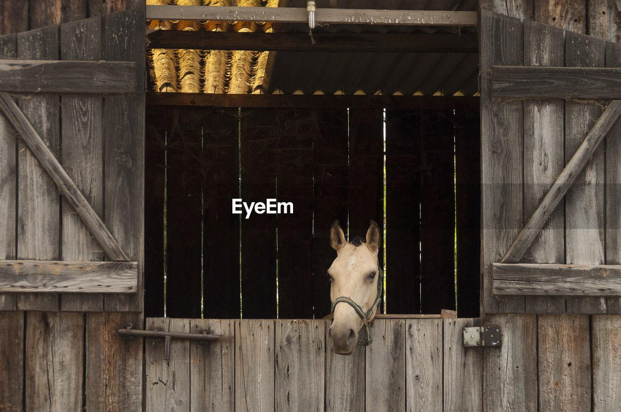 Horse Peeking Through Stable