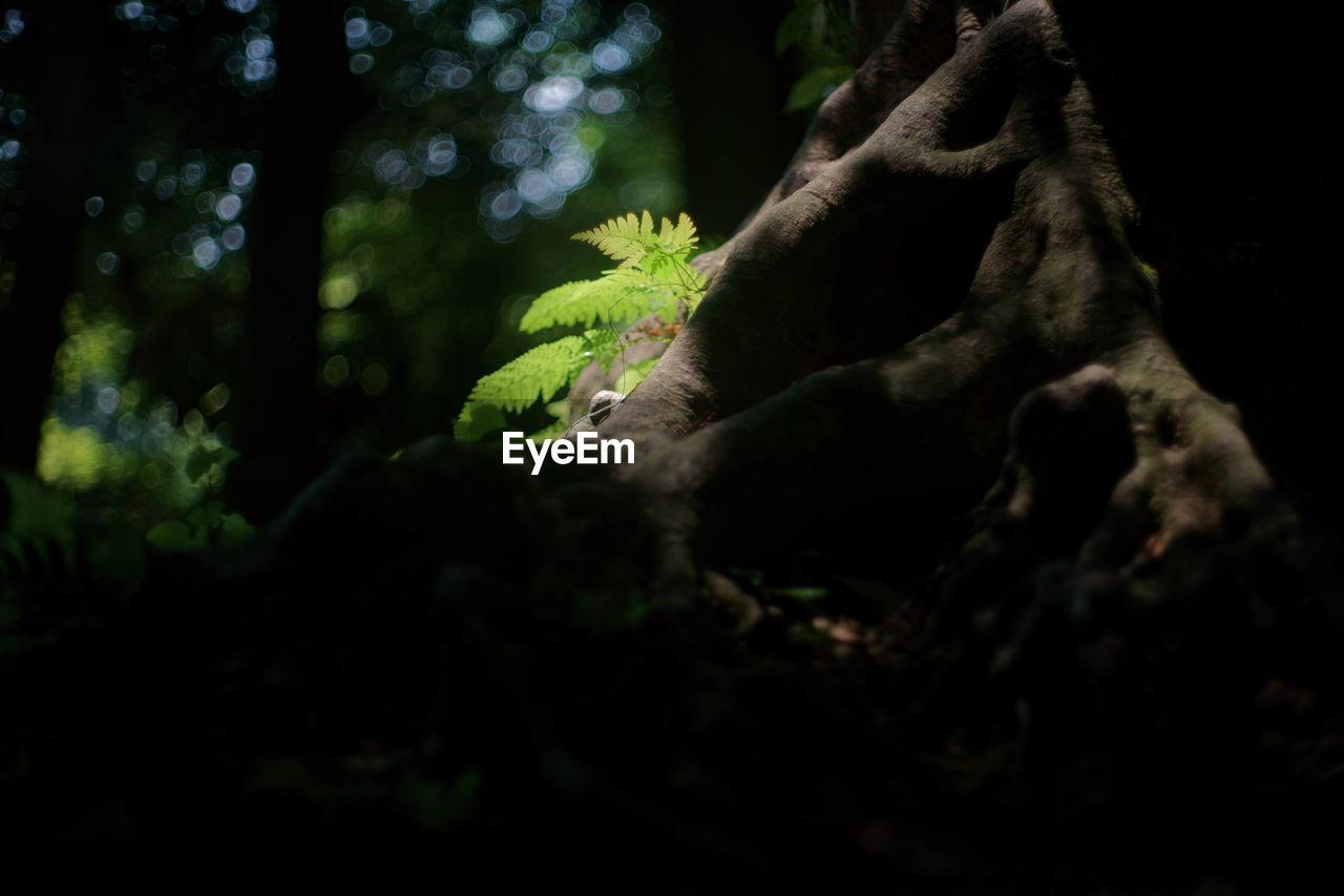 tree, nature, forest, tree trunk, one animal, green color, no people, growth, beauty in nature, outdoors, branch, day, animal themes, animals in the wild, close-up