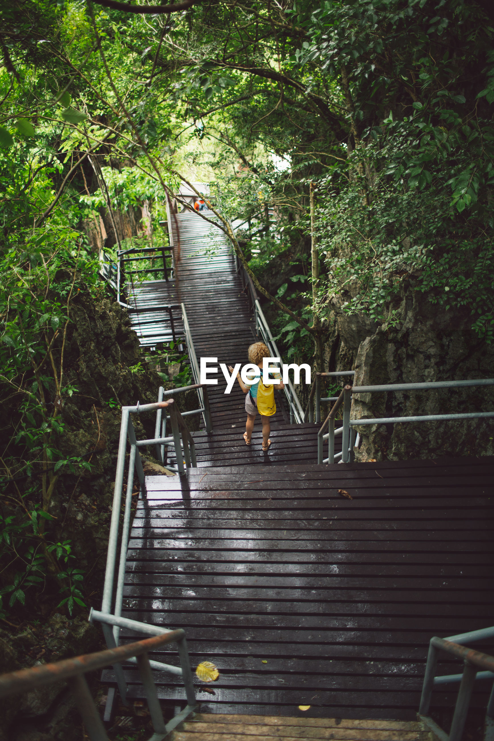 High angle view of woman on steps in forest