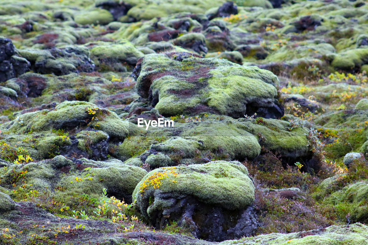 no people, rock - object, moss, nature, day, outdoors, green color, tranquility, beauty in nature, water, close-up