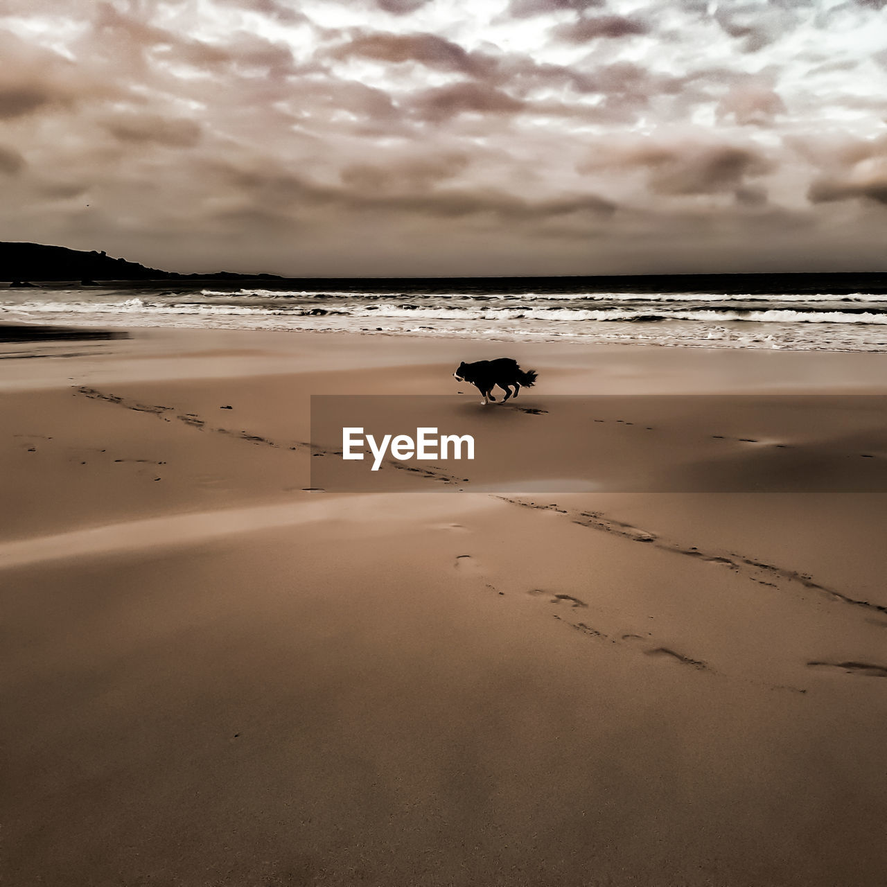 nature, sky, beach, cloud - sky, sand, beauty in nature, sea, animal themes, water, one animal, scenics, tranquility, sunset, outdoors, tranquil scene, horizon over water, animals in the wild, silhouette, day, domestic animals, mammal, no people, low tide, bird
