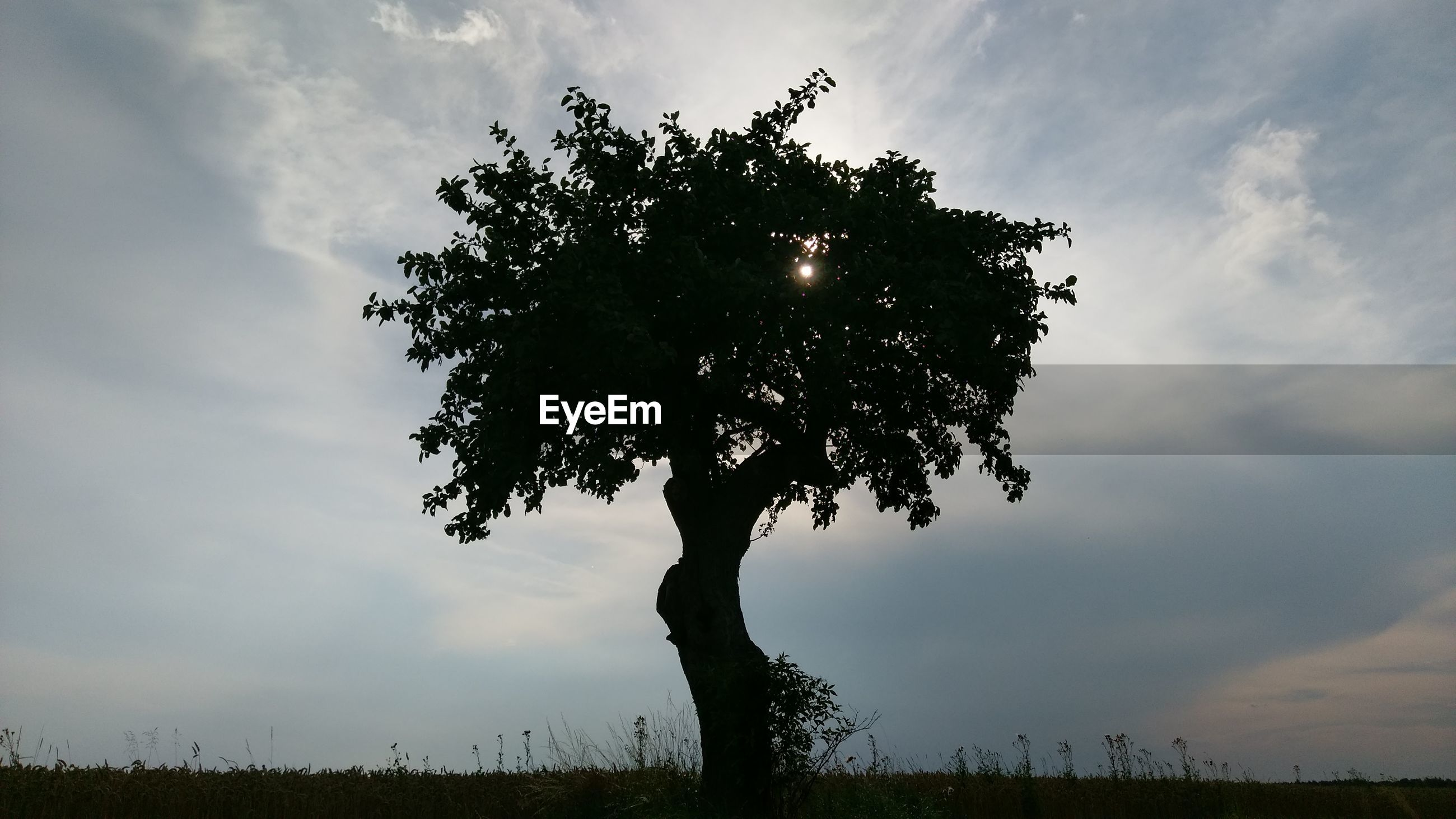 Silhouette tree on field against cloudy sky