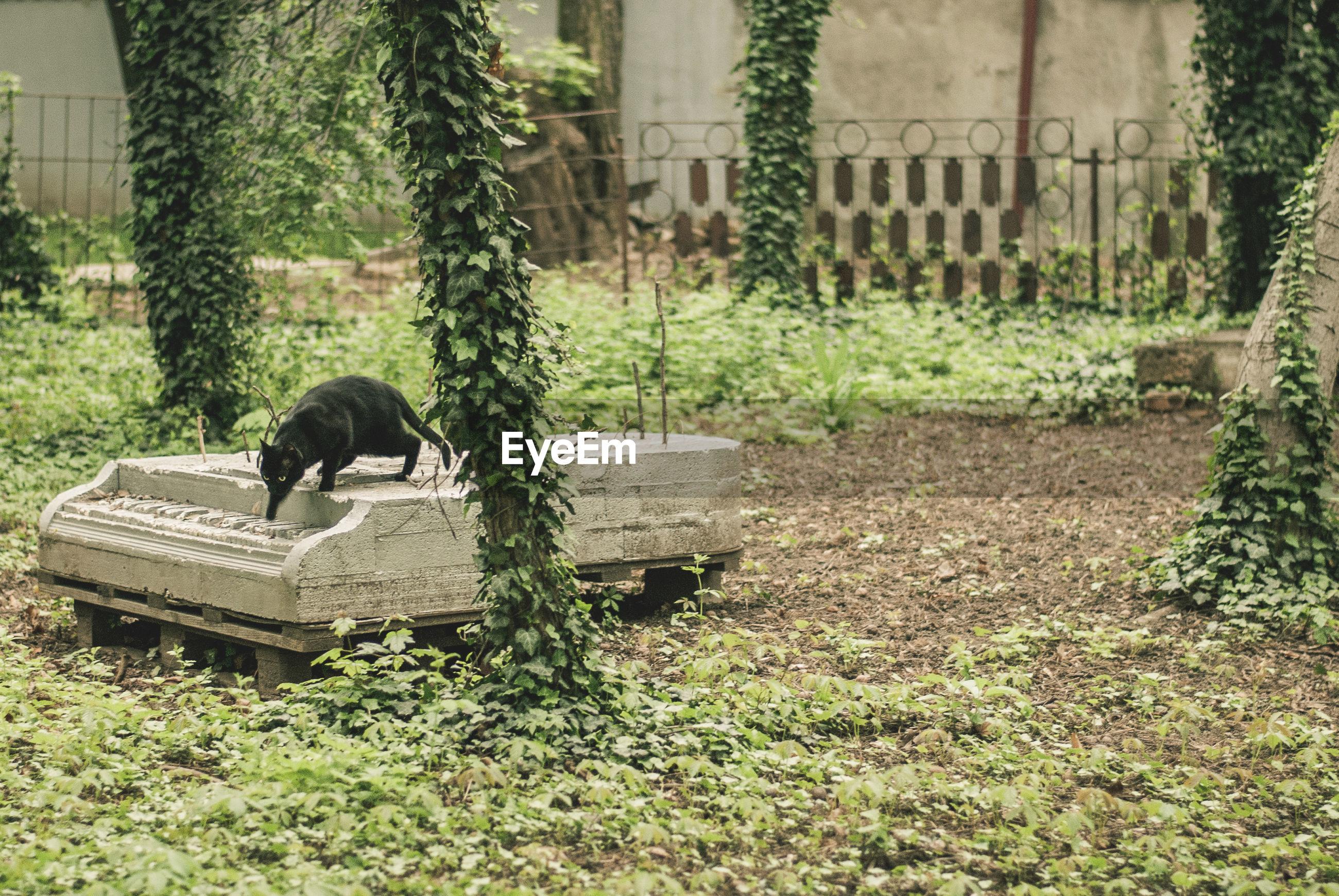 Cat walking on built structure amidst plants