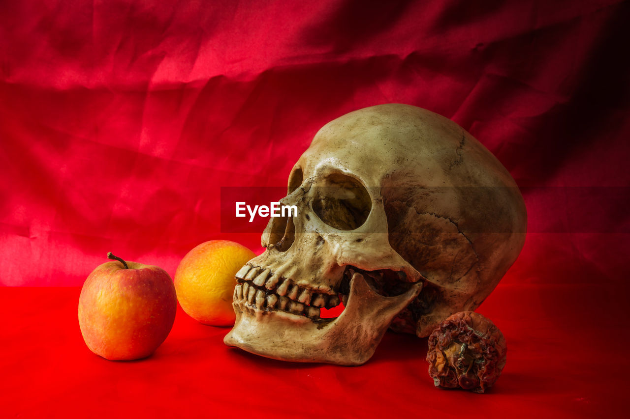 bone, human skeleton, red, indoors, no people, close-up, skeleton, still life, body part, spooky, food and drink, skull, table, single object