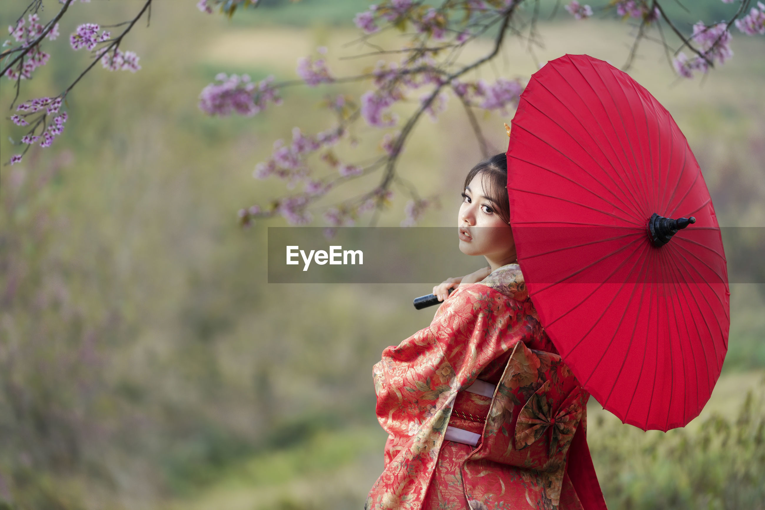 Beautiful female wearing traditional japanese kimono with cherry blossom in spring, japan.