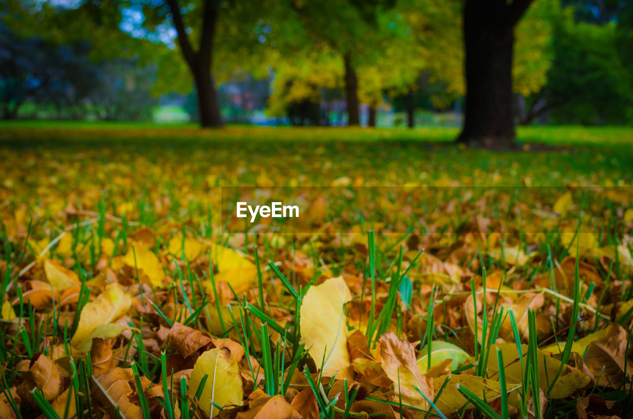 plant, land, growth, field, beauty in nature, tree, leaf, nature, plant part, yellow, day, green color, no people, focus on foreground, flower, selective focus, tranquility, outdoors, autumn, close-up, change, leaves