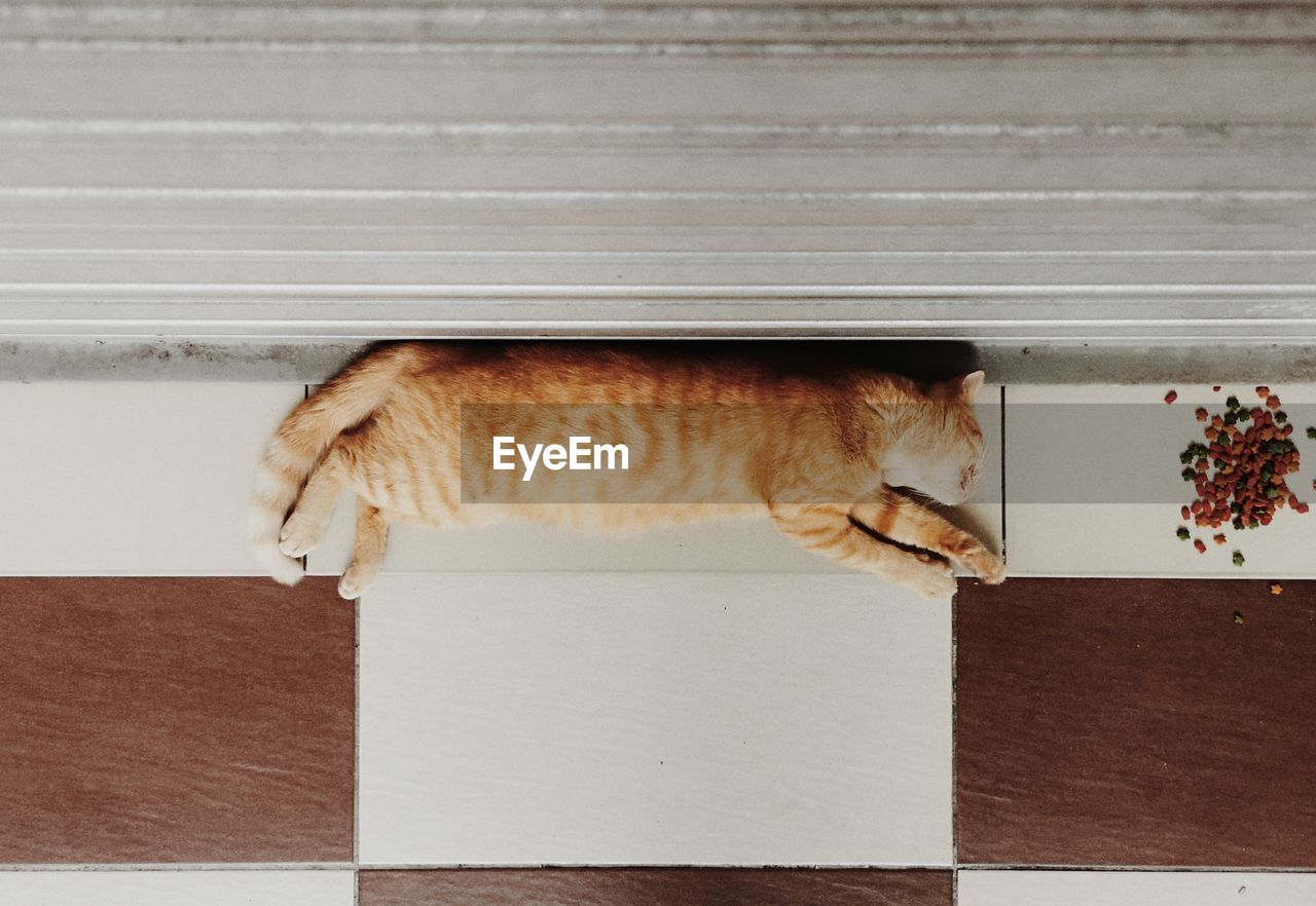 feline, cat, pets, domestic, animal, mammal, domestic animals, animal themes, domestic cat, one animal, vertebrate, no people, relaxation, indoors, directly above, sleeping, close-up, resting, home interior, high angle view, whisker, ginger cat
