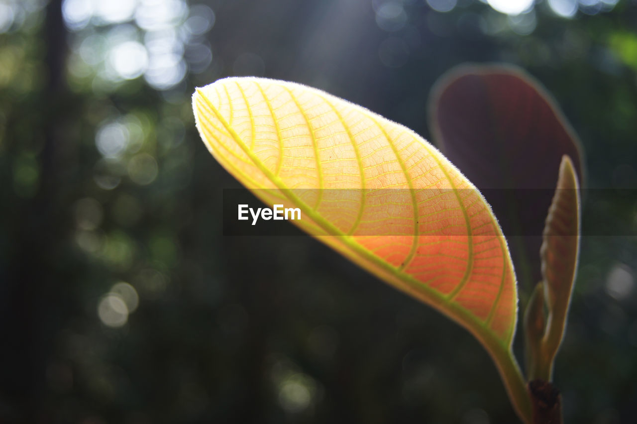 focus on foreground, close-up, nature, day, plant part, leaf, no people, outdoors, plant, yellow, beauty in nature, selective focus, fragility, growth, sunlight, animal, animal wing, vulnerability, multi colored, leaf vein, butterfly - insect, leaves
