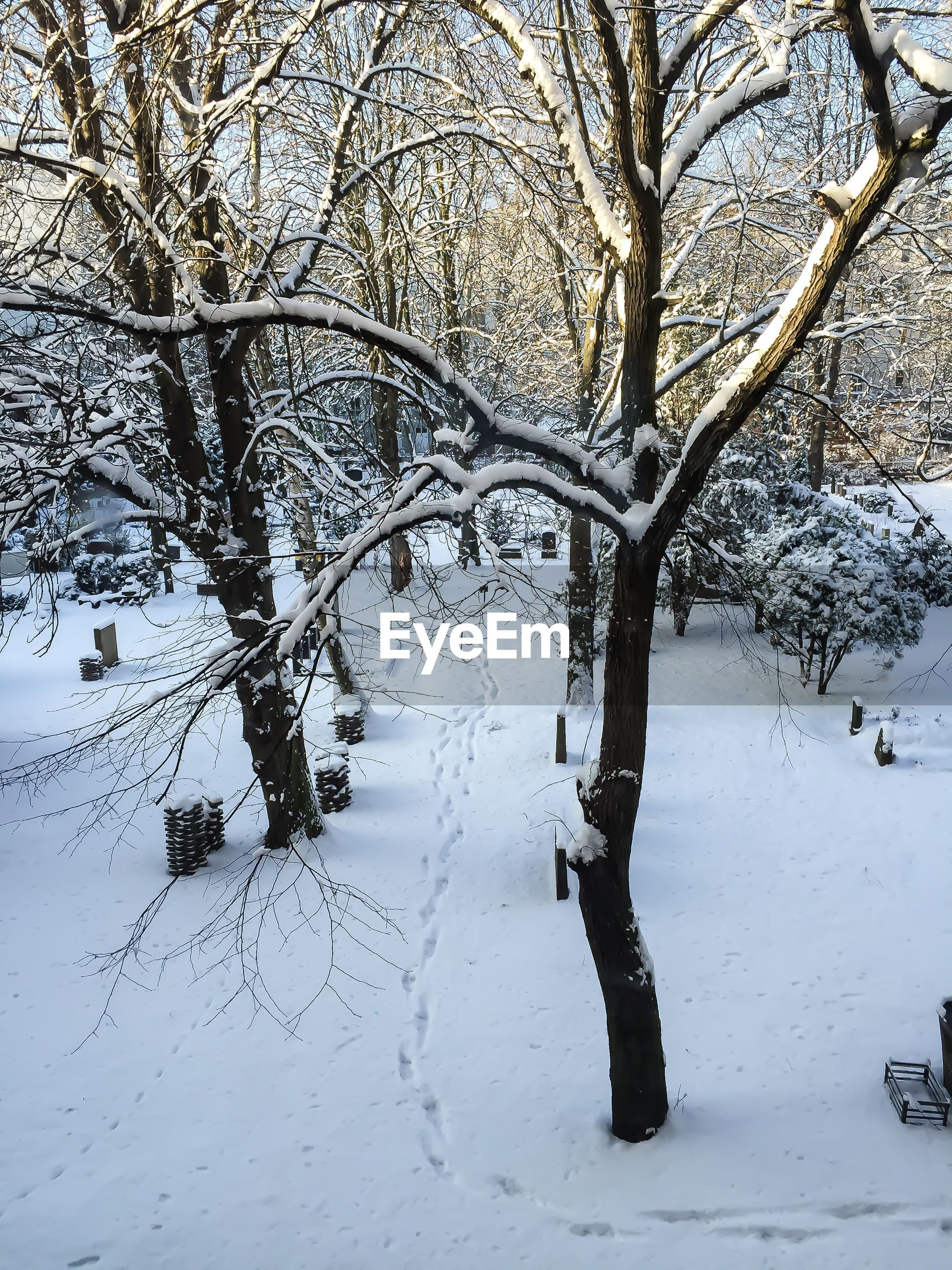 High angle view of trees on snowy landscape