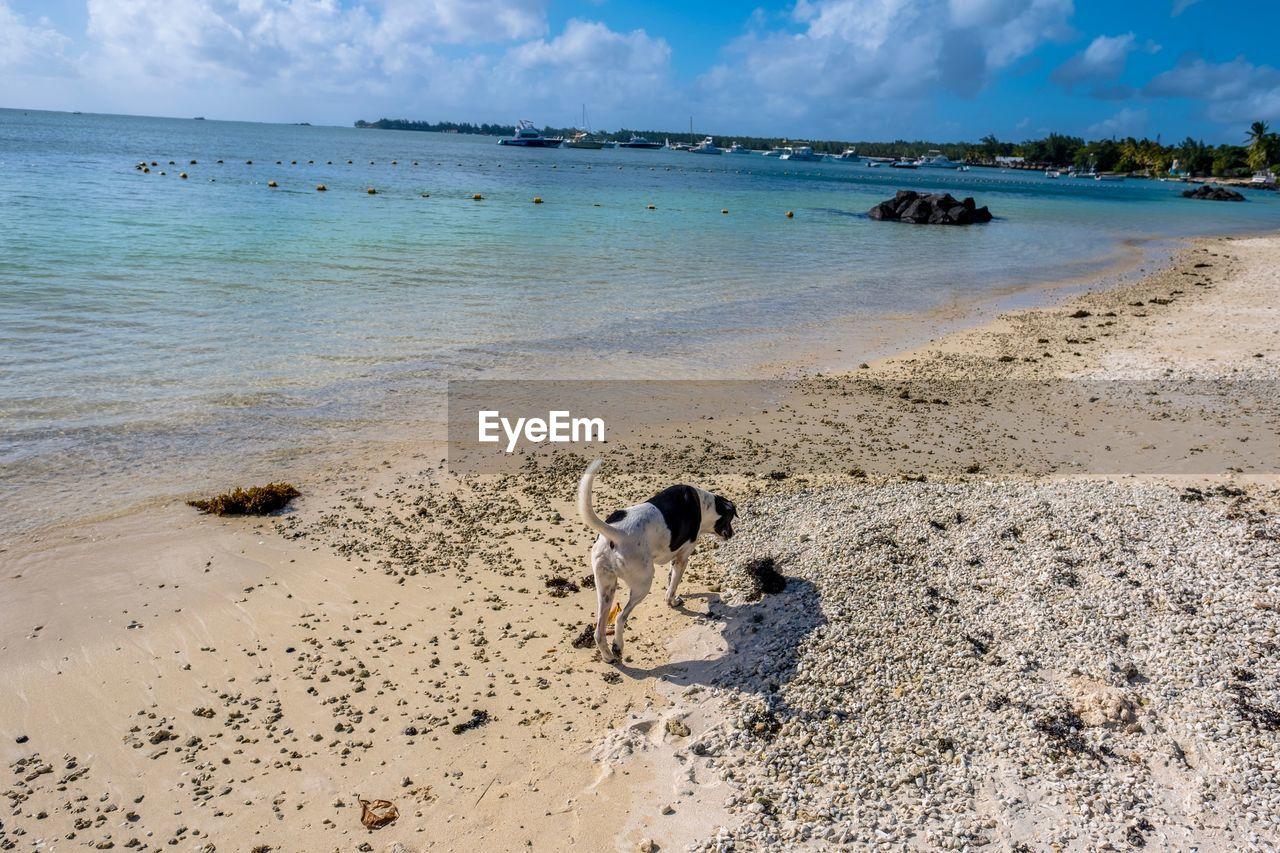 water, mammal, beach, domestic, pets, sea, domestic animals, land, canine, dog, one animal, animal, animal themes, vertebrate, sand, sky, nature, cloud - sky, horizon over water, no people