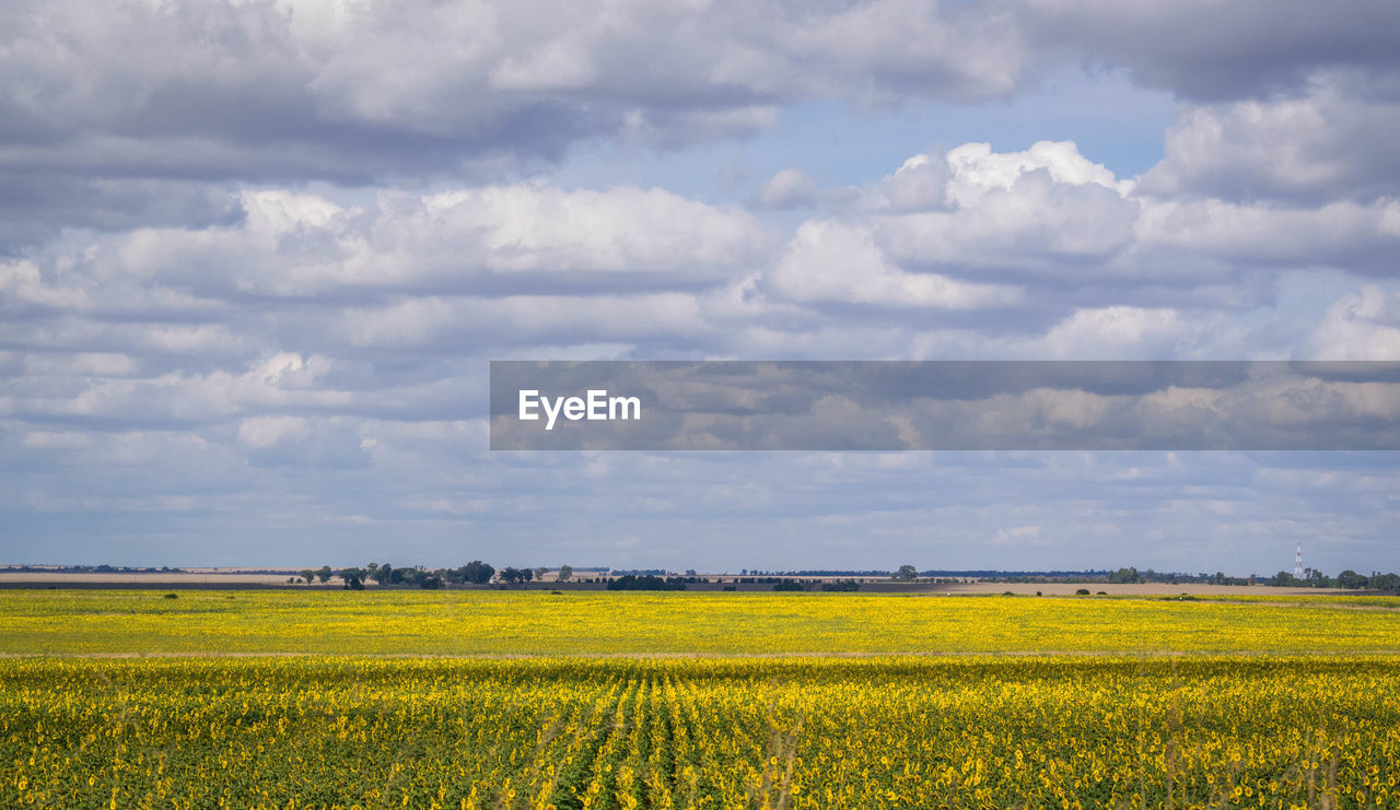 cloud - sky, beauty in nature, landscape, sky, environment, field, scenics - nature, tranquil scene, land, tranquility, agriculture, yellow, rural scene, growth, oilseed rape, nature, plant, crop, day, no people, outdoors