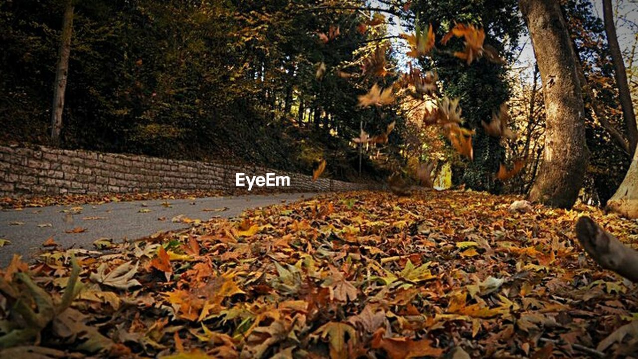 leaf, autumn, change, tree, nature, leaves, dry, beauty in nature, fallen, outdoors, forest, scenics, tranquility, no people, day, abundance, maple leaf, growth, tree trunk, maple