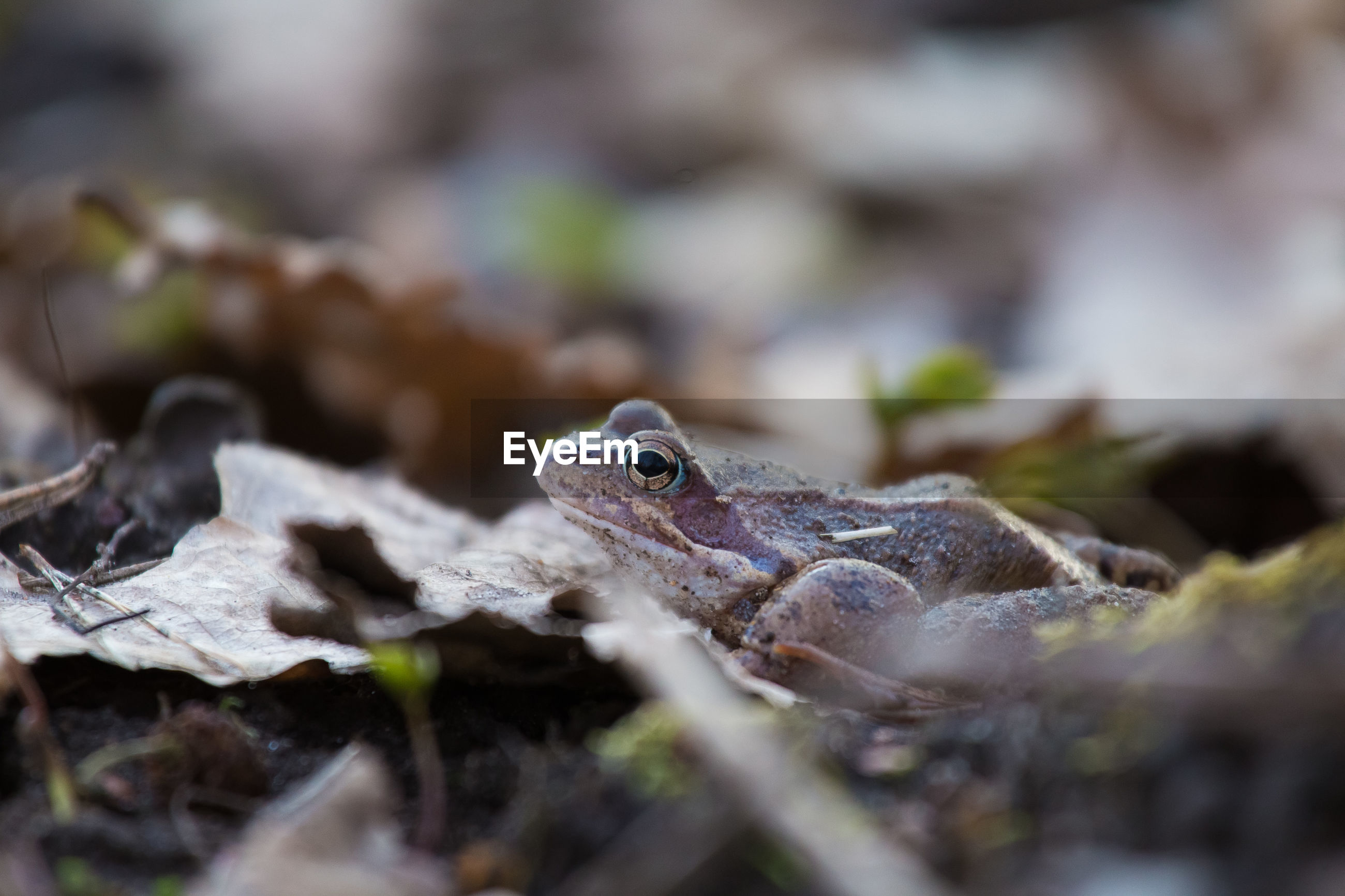 Frog on plants