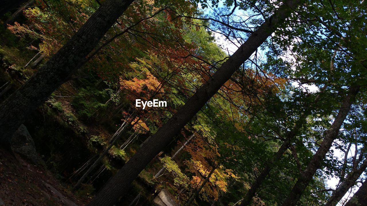 tree, nature, beauty in nature, forest, tree trunk, branch, autumn, growth, scenics, low angle view, outdoors, tranquility, day, no people, tranquil scene, leaf, sky