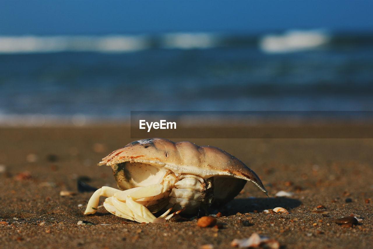 Crab at beach