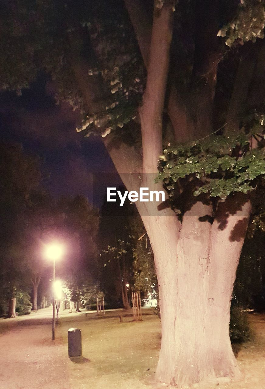 tree, night, tree trunk, illuminated, nature, outdoors, growth, tranquility, beauty in nature, no people, scenics, sky