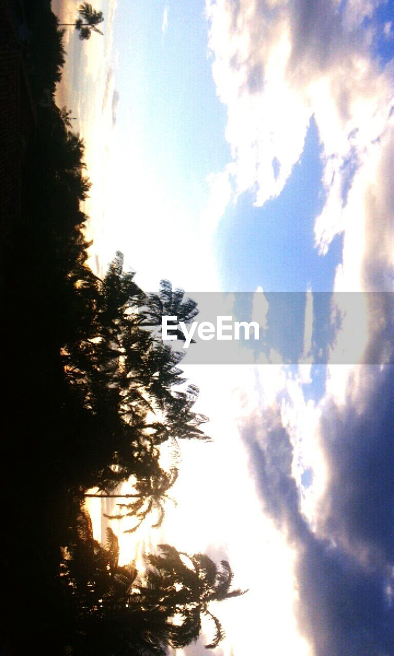 sky, tree, nature, cloud - sky, no people, scenics, tranquility, tranquil scene, silhouette, beauty in nature, growth, outdoors, low angle view, day, scenery