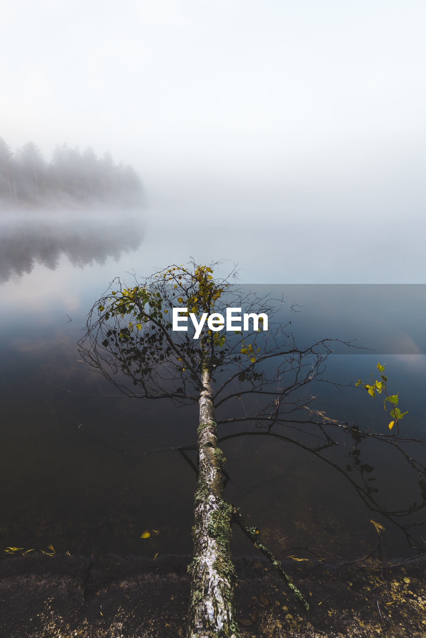 VIEW OF CALM LAKE AGAINST FOGGY WEATHER