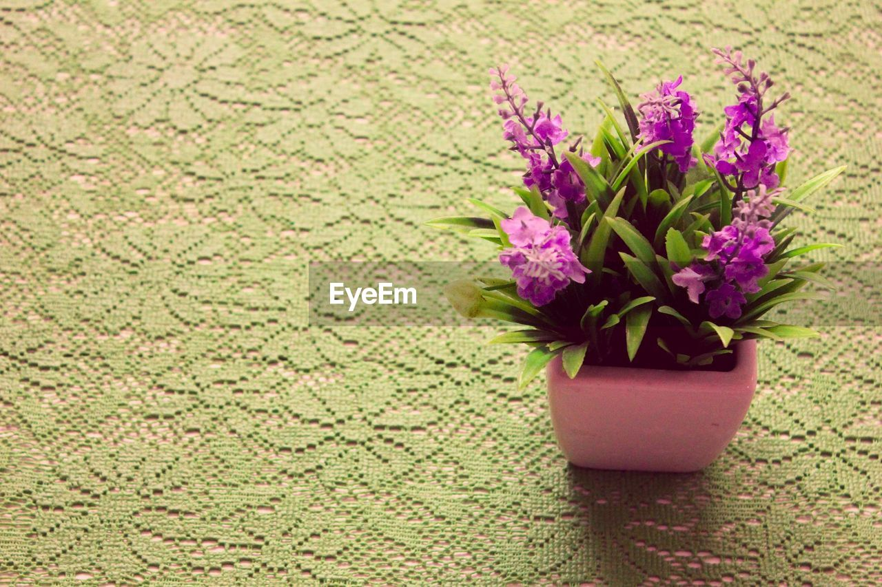 flower, growth, nature, plant, no people, green color, fragility, beauty in nature, indoors, freshness, close-up, day, flower head