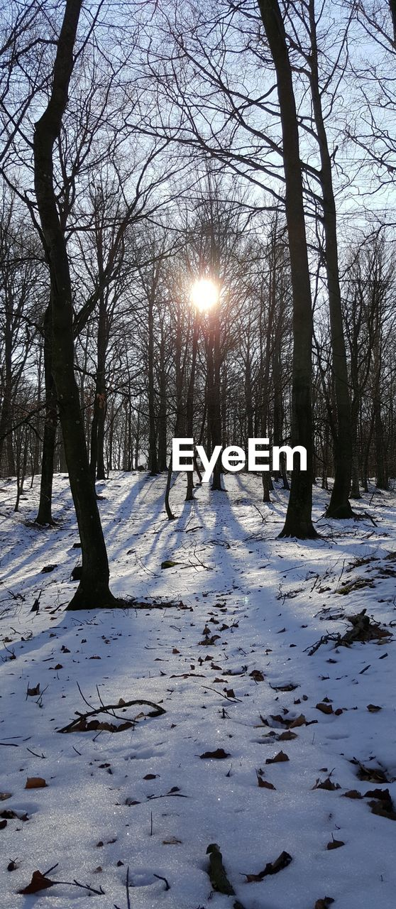 snow, winter, cold temperature, tree, sky, bare tree, plant, nature, sun, tranquility, covering, scenics - nature, beauty in nature, sunlight, no people, frozen, white color, land, field, outdoors, cold, lens flare