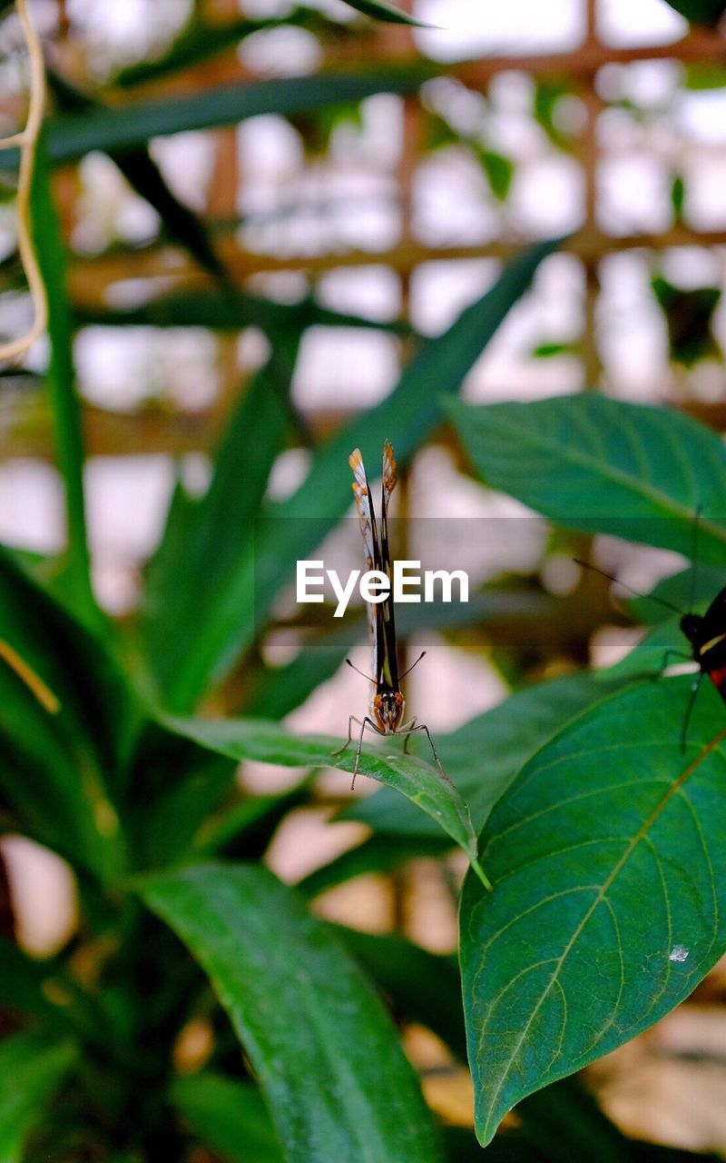 insect, one animal, animal themes, animals in the wild, leaf, green color, animal wildlife, wildlife, close-up, day, outdoors, nature, focus on foreground, plant, no people