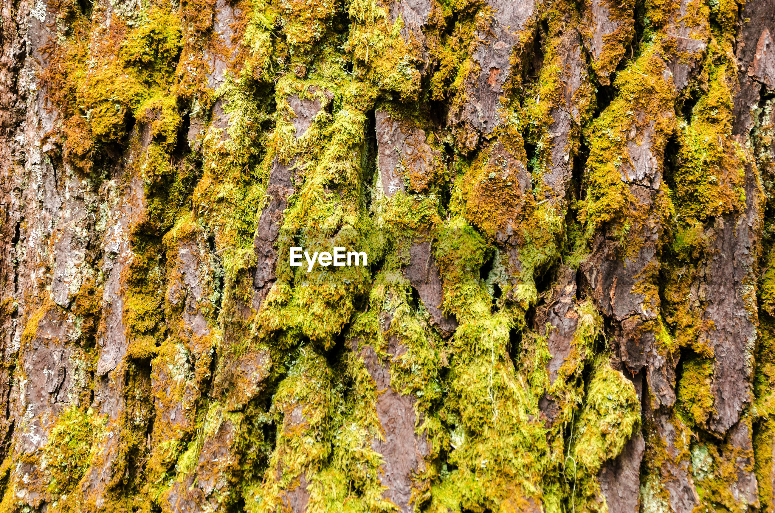 Full frame shot of moss covered tree trunk