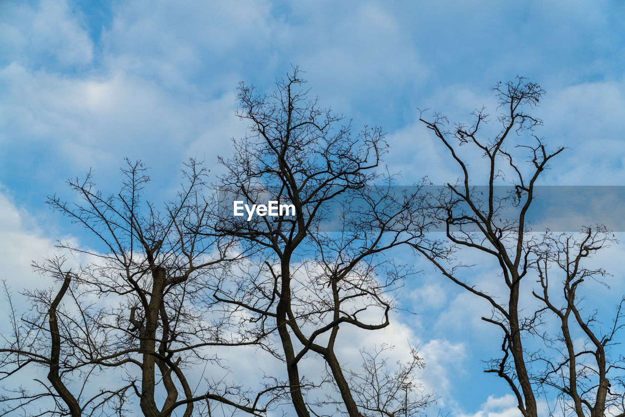 bare tree, sky, tree, branch, nature, low angle view, cloud - sky, beauty in nature, outdoors, day, tranquility, no people, scenics