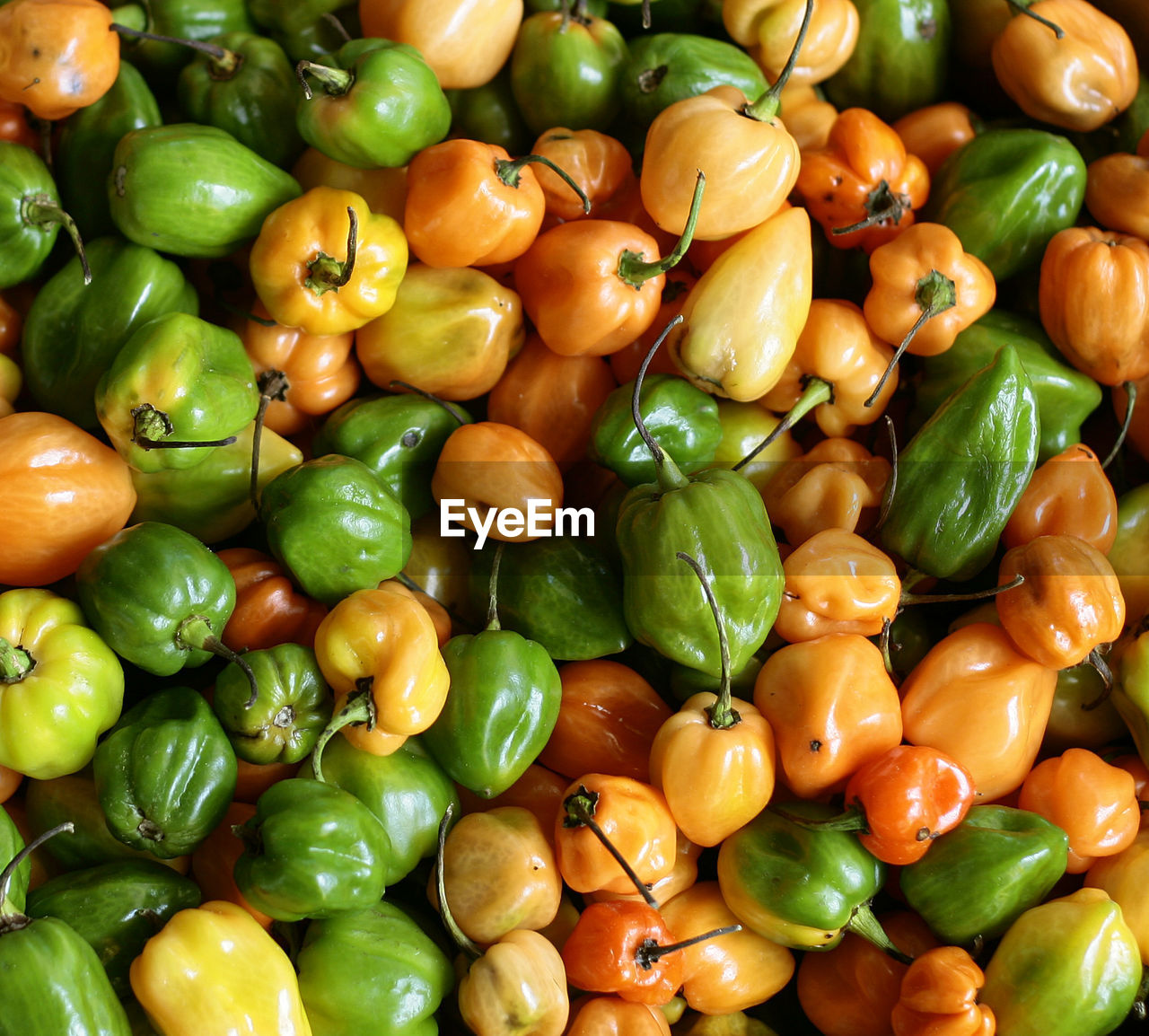 green color, vegetable, healthy eating, full frame, food and drink, food, backgrounds, abundance, bell pepper, freshness, for sale, no people, retail, variation, red bell pepper, large group of objects, close-up, market, day, indoors