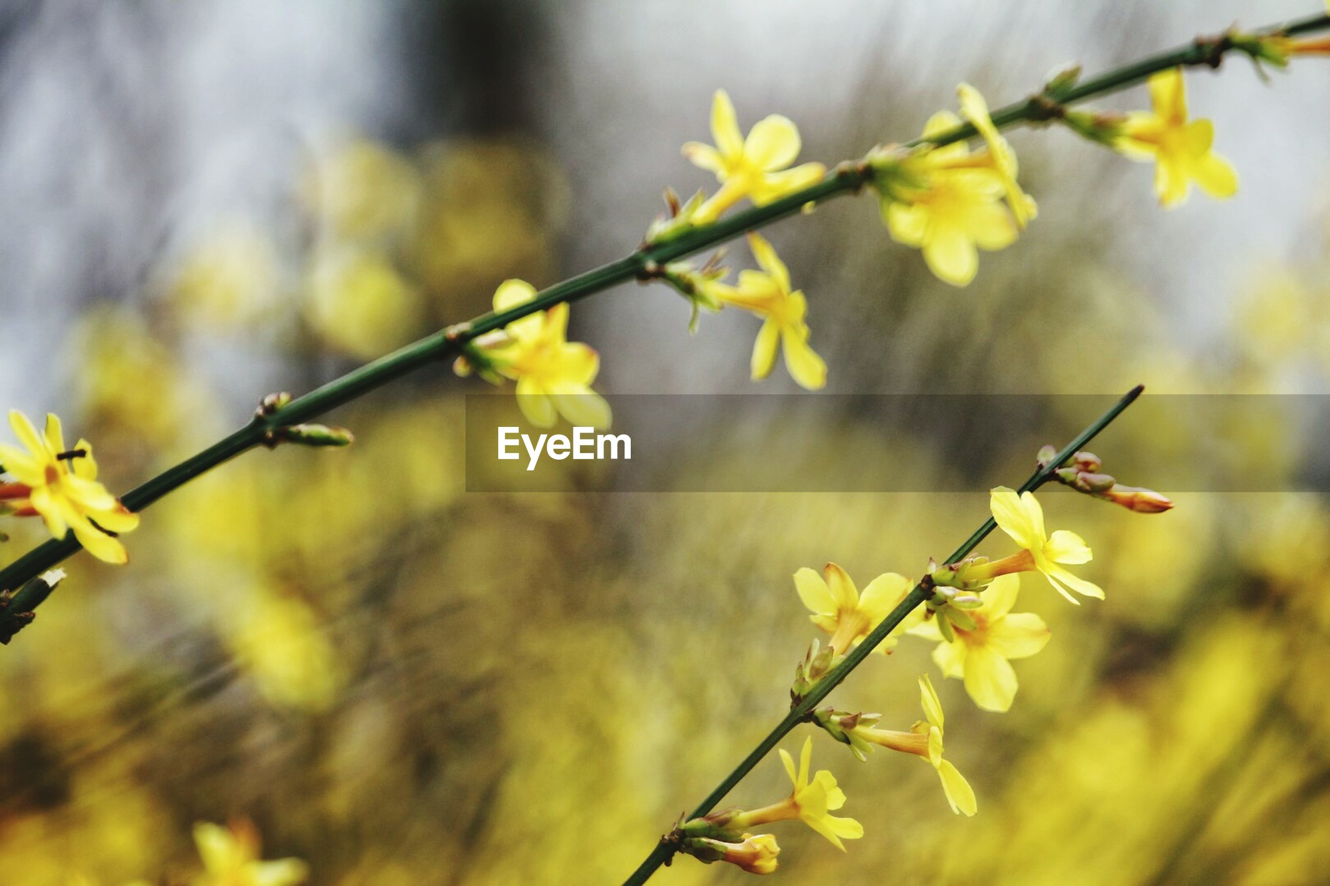growth, nature, flower, beauty in nature, plant, fragility, day, outdoors, no people, twig, freshness, focus on foreground, close-up, branch, tree, animal themes, flower head, sky