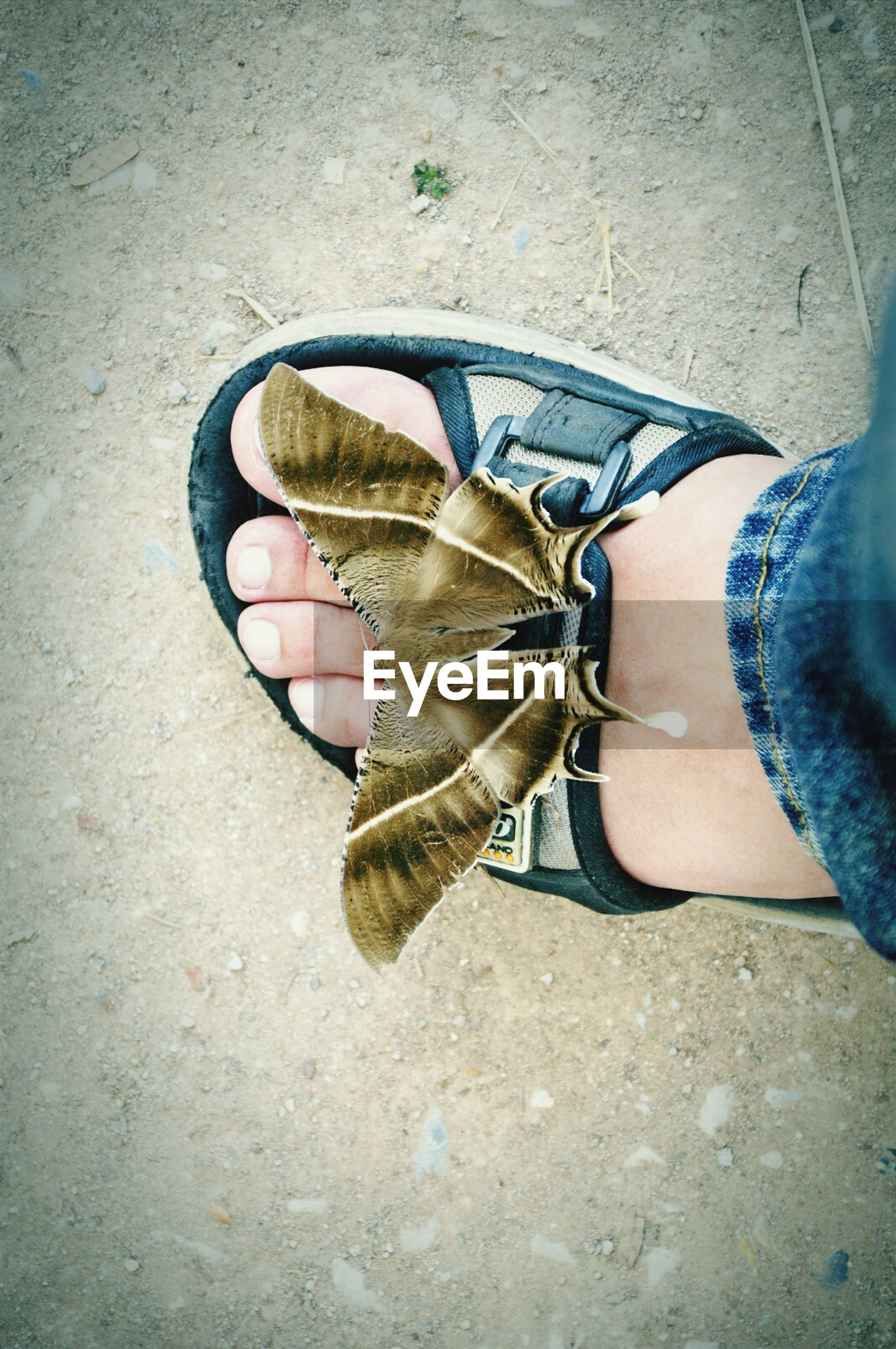 low section, shoe, high angle view, lifestyles, leisure activity, person, men, street, one animal, bicycle, sunlight, footwear, standing, day, animal themes, part of, transportation