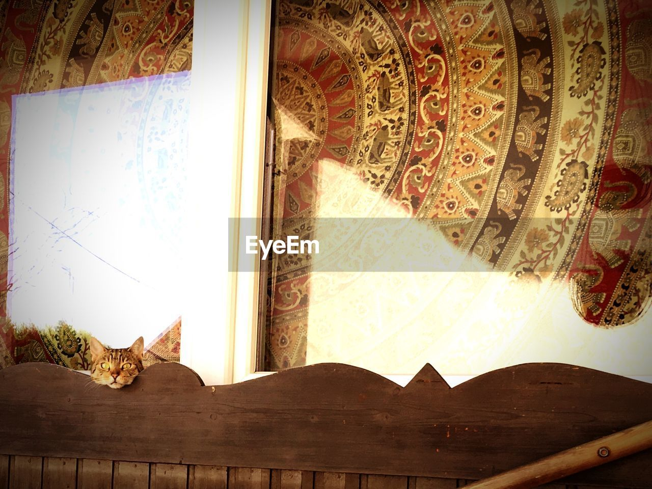 architecture, indoors, built structure, no people, day, art and craft, building, animal, vertebrate, animal themes, feline, wood - material, domestic cat, window, design, cat, pattern, low angle view, creativity, ceiling