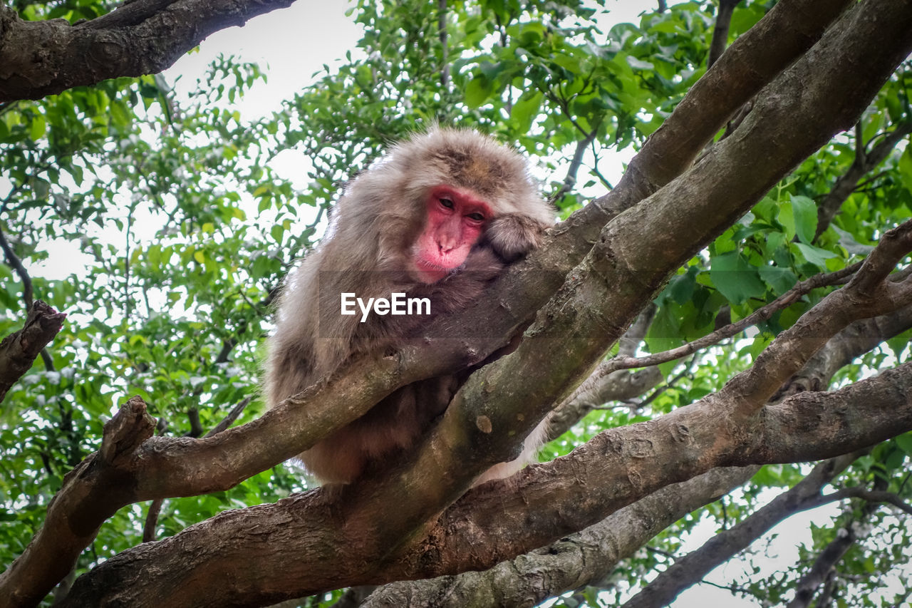 LOW ANGLE VIEW OF MONKEY SITTING ON BRANCH