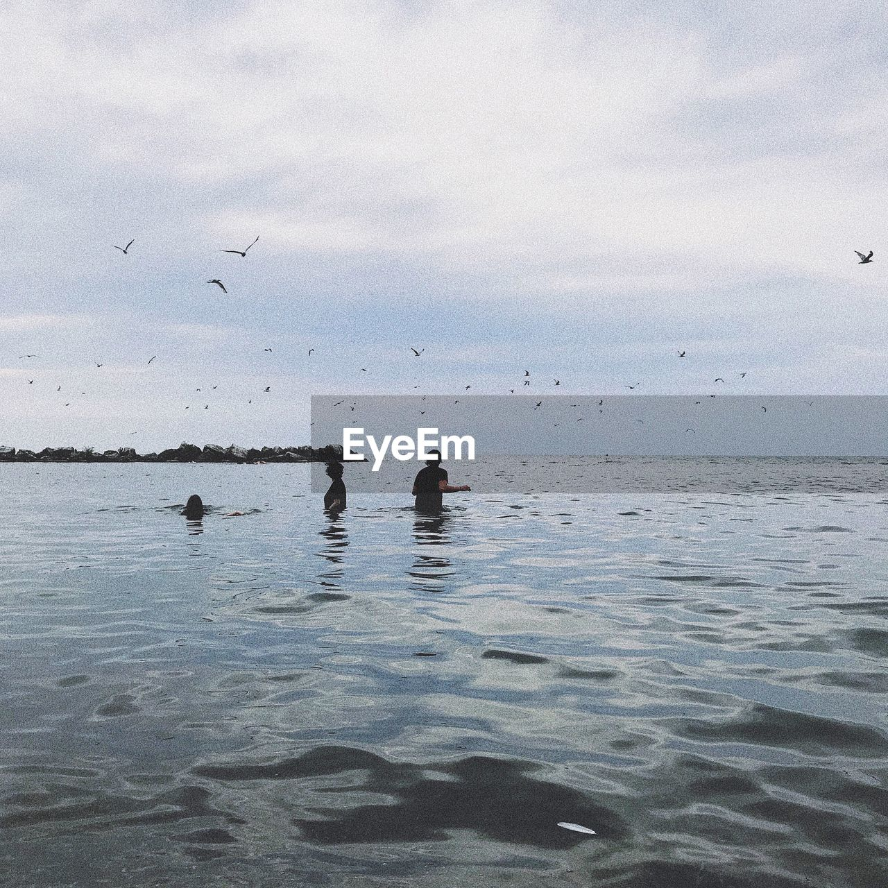 water, sky, sea, cloud - sky, vertebrate, group of animals, bird, horizon over water, waterfront, beauty in nature, animal themes, nature, animal wildlife, horizon, scenics - nature, animal, animals in the wild, tranquility, flying, flock of birds, outdoors