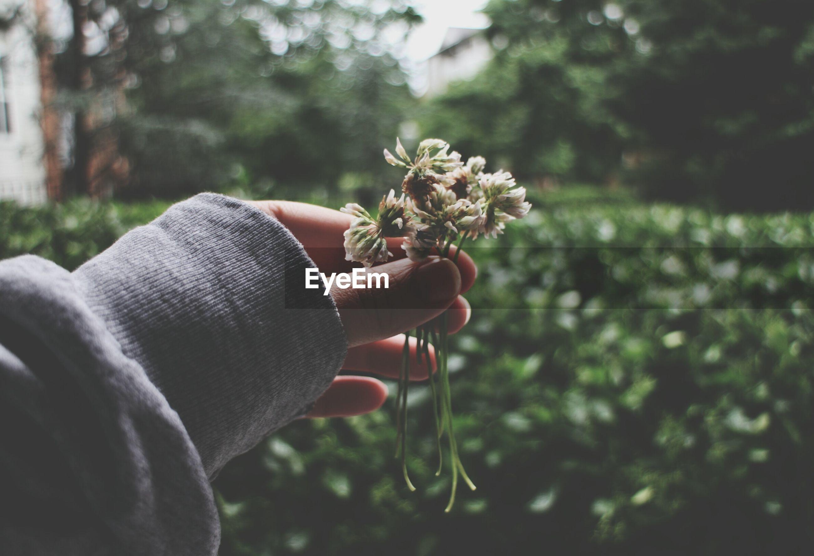 Human hand holding flower