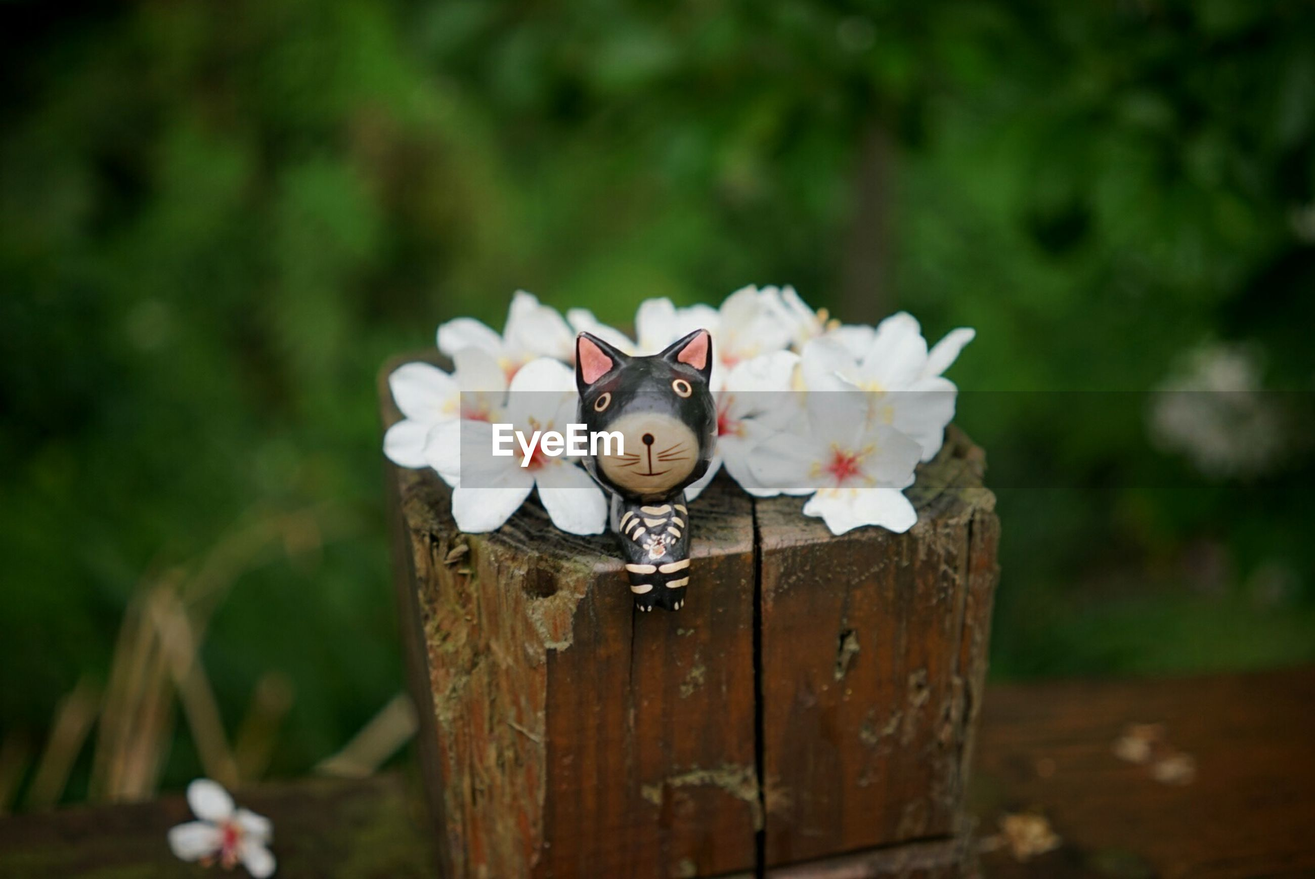 Close-up of cat figurine and white flowers on wood