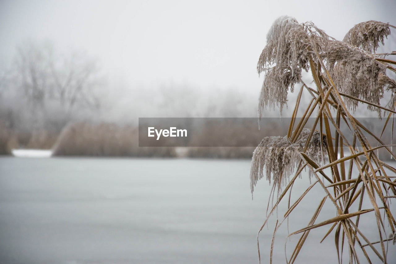 no people, winter, nature, snow, outdoors, cold temperature, close-up, day, lake, clear sky, beauty in nature, sky, water